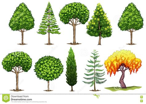 type of trees set of different types of trees stock vector image 75637478