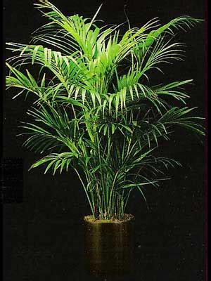 Plants Low Light indoor plants gallery the potted plant scottsdale