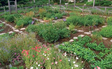 kitchen vegetable garden who says a kitchen garden can t be beautiful gardening