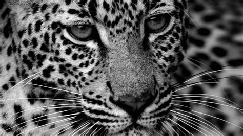 Cool Car Wallpapers Hd Drawings Or Portraits by Black And White Camo Wallpaper Wallpapersafari