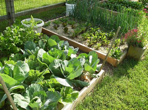 amazing vegetable gardens fresh amazing home vegetable garden australia 10902