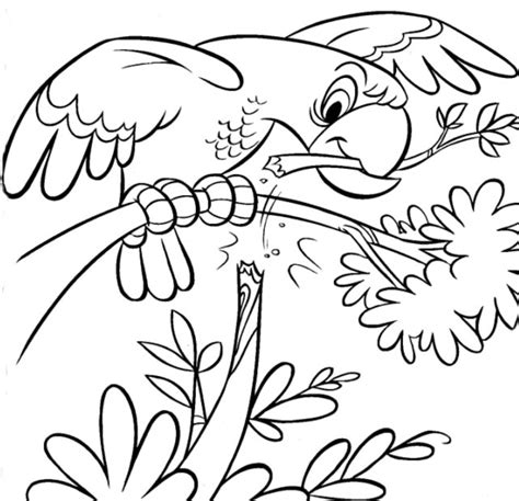 coloring book pictures of animals coloring now 187 archive 187 animals coloring pages