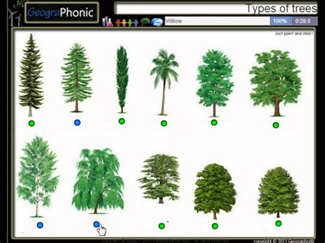 type of trees different types of trees www pixshark images