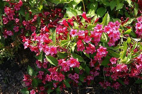 pflanze immergrün winterhart blühend bl 252 hende str 228 ucher winterhart heidelbeeren pflanzen