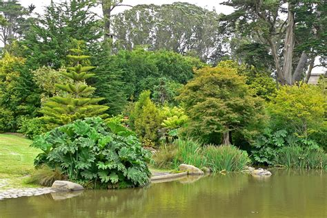 botanical gardens sf sf botanical gardens japanese moon garden san francisco