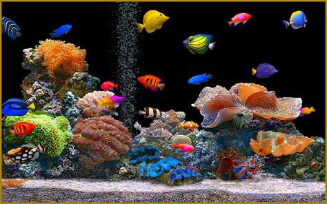 un aquarium feng shui