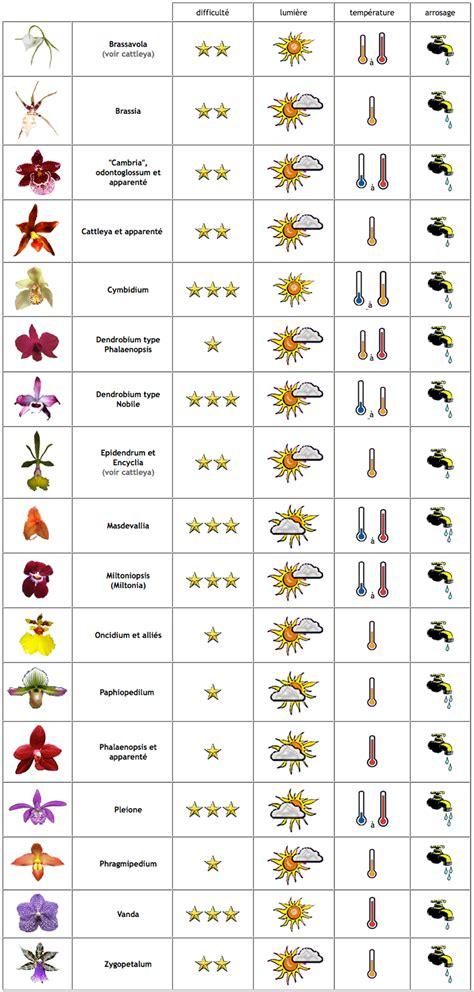 comment entretenir une orchid 233 e en pot en vase ou en terre