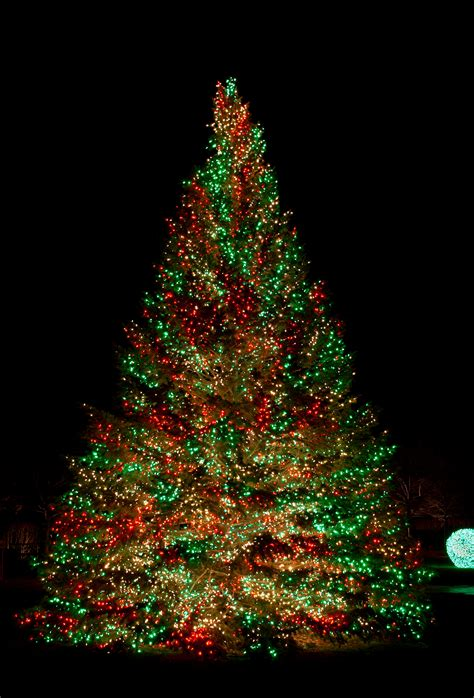 christmastree lights primo lights announces soaring demand for led