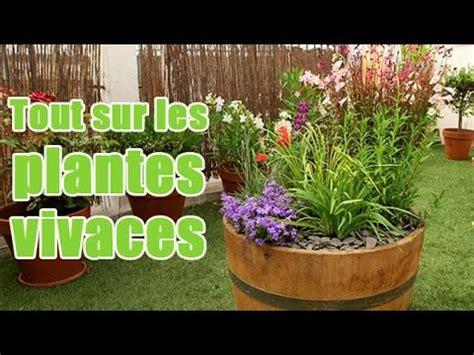 comment planter et entretenir des plantes vivaces pour balcon et terrasse