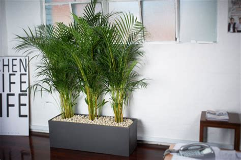 plants for the office office plants ambius new zealand