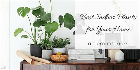 the best indoor plants best indoor plants for your home a clore interiors