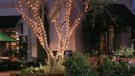 how to wrap lights around tree branches how to wrap lights around tree branches 28 images