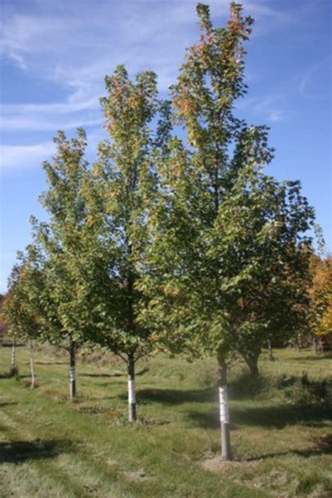 celebrate it tree trees country acres tree farm