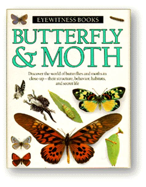 butterfly picture books thinking butterfly moth