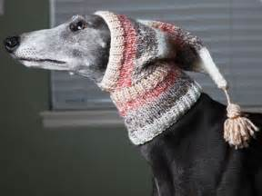 knitting for greyhounds this greyhound knit hat for winter greyhound