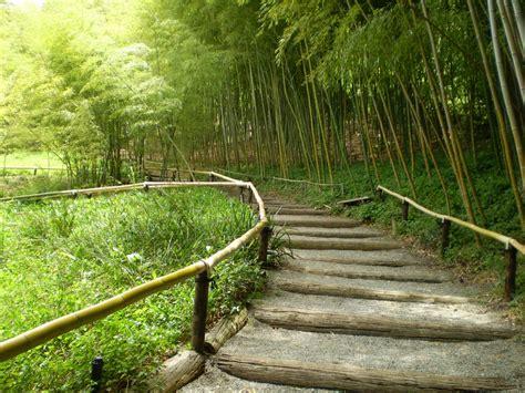 bamboo garden design ideas bamboo garden ideas interior design ideas by interiored