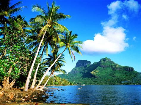 wallpapers of tree wallpapers coconut tree wallpapers