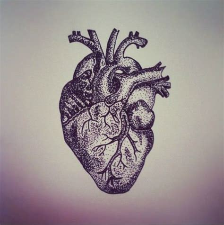 anatomical heart tattoo ink pinterest