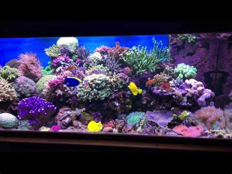 aquarium eau de mer 1000 litres