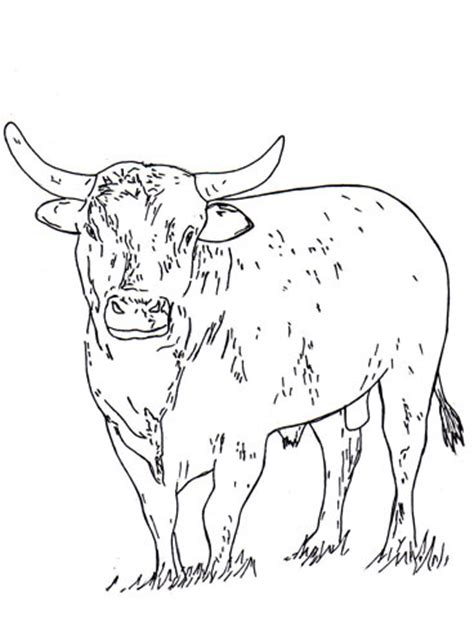 coloring pages of the pbr bulls coloring pages