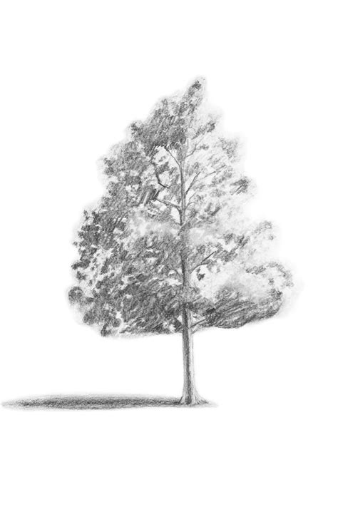 tree realistic branching out learn how to draw a realistic tree