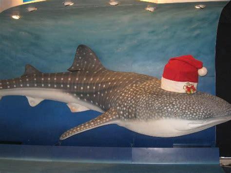 whale shark replica picture of osaka aquarium kaiyukan osaka tripadvisor