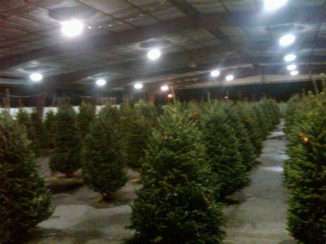 tree sales tree sales collier county fair