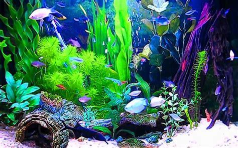aquariums images aquarium fond d 233 cran hd fond d 233 cran and background photos 40193626