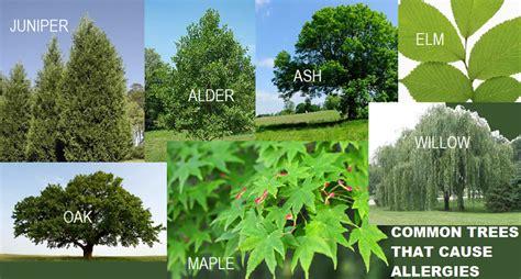 allergic reaction to tree allergies does my seasonal allergies