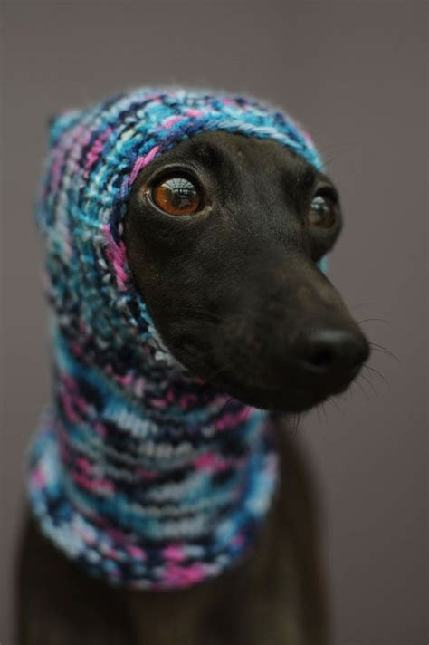 knitted hats for dogs knitted hats for dogs from quot vinthunden quot italian
