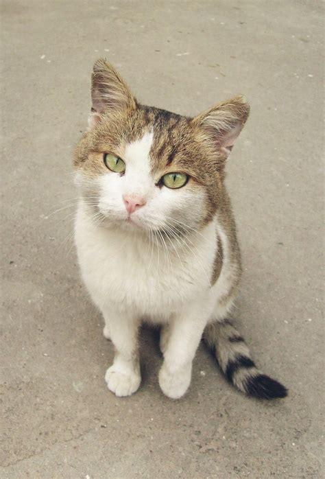 of a cat file confused cat jpg