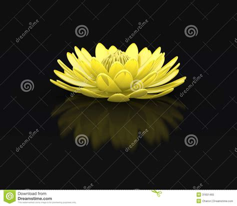 Golden Lotus Perfect Water Lily Royalty Free Stock Photo ...