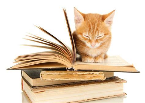cat picture books cat fiction for feline fanatics