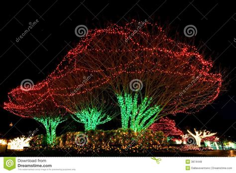outdoor tree lights images of tree lights outdoor tree