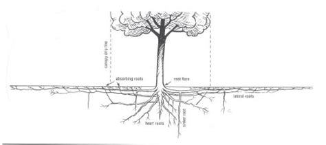 planting diagram for trees planting free engine image for user manual