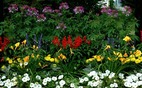 flowers shade garden 13 most photogenic gardens flower hd images