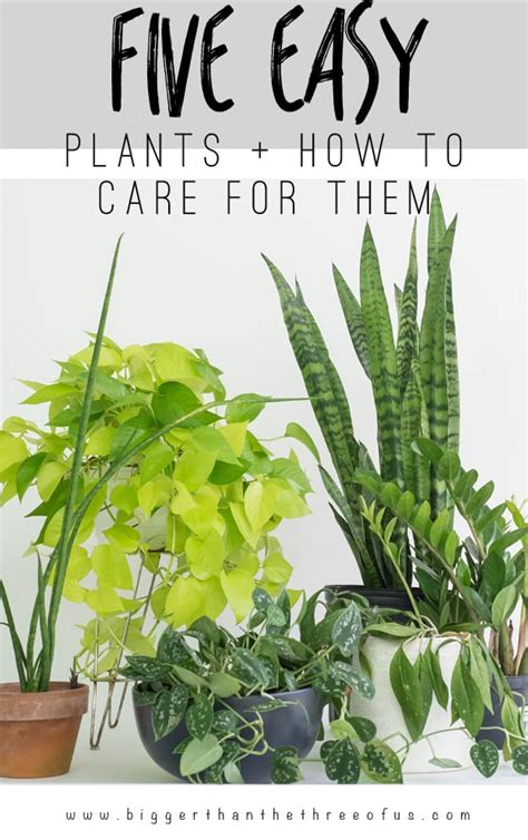 easy houseplants 5 easy houseplants and how to care for them bigger than