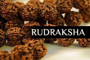 authentic rudraksha holy store