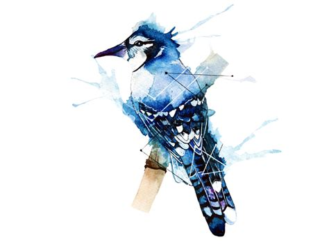 shop blue jay dottinghill temporary tattoos are now