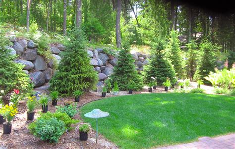 bushes and trees trees shrubs custom landscaping