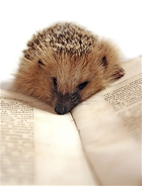 hedgehog picture book 34 best images about animals with books on