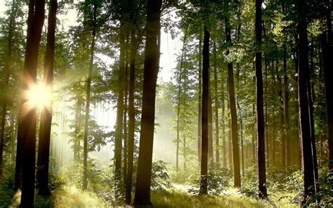 chagne trees the best technology for fighting climate change trees