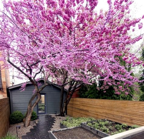 small flowering trees for small gardens flowering trees for small gardens small ornamental trees