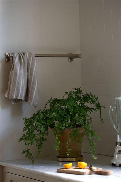 best plant for indoor low light best 20 low light houseplants ideas on indoor