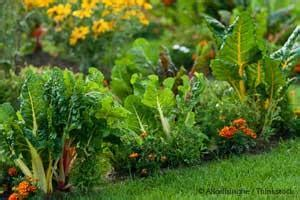 how to make your own vegetable garden it s time to make your own vegetable garden