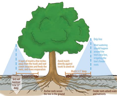 should you water a tree how much should you water a tree 28 images 25 best