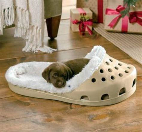 Hammocks For Bedrooms cool dog bed in shape of a shoe interior design ideas