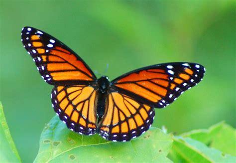 Write On Markle Make Butterfly Memories