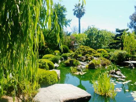 japanese rock gardens pictures japanese rock garden picture of himeji garden adelaide