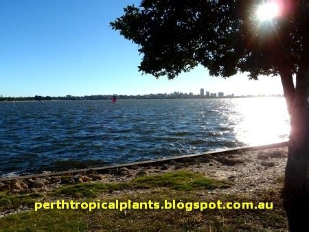 live trees perth perth tropical plants growing tropical plants in perth